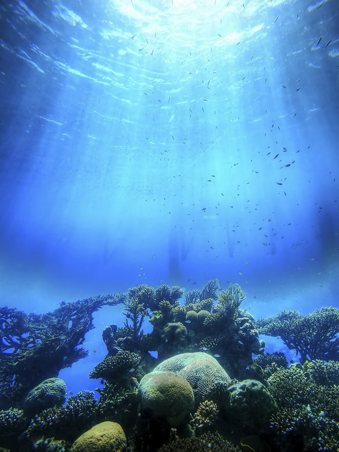 Морская мозаика