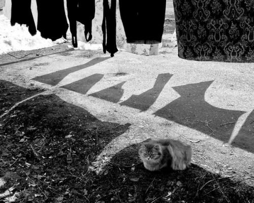 """""""У нас во дворе"""". Фото: Татьяна Иванова"""